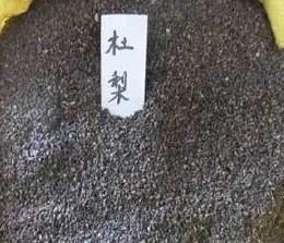 红高粮视频酿酒牧草酿酒用饲粮食量大用微信高粱的步聚〈图示法〉图片