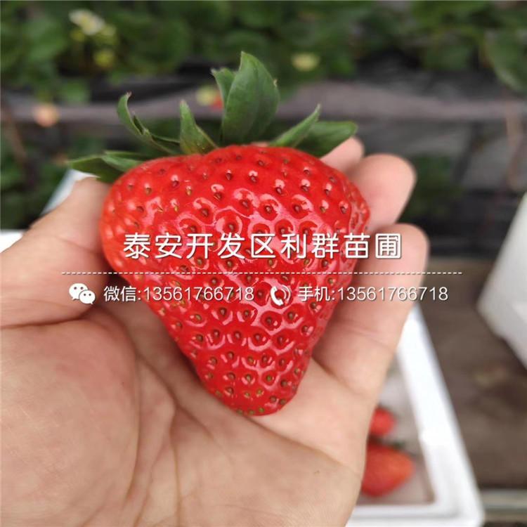 妙香7号草莓苗、妙香7号草莓苗价格及报价