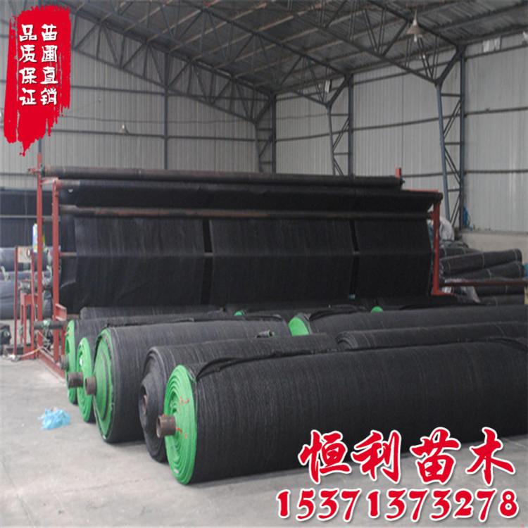 黑色遮阴网遮光网 农用遮阳网 抗老化寿命长 加密6针遮阳网