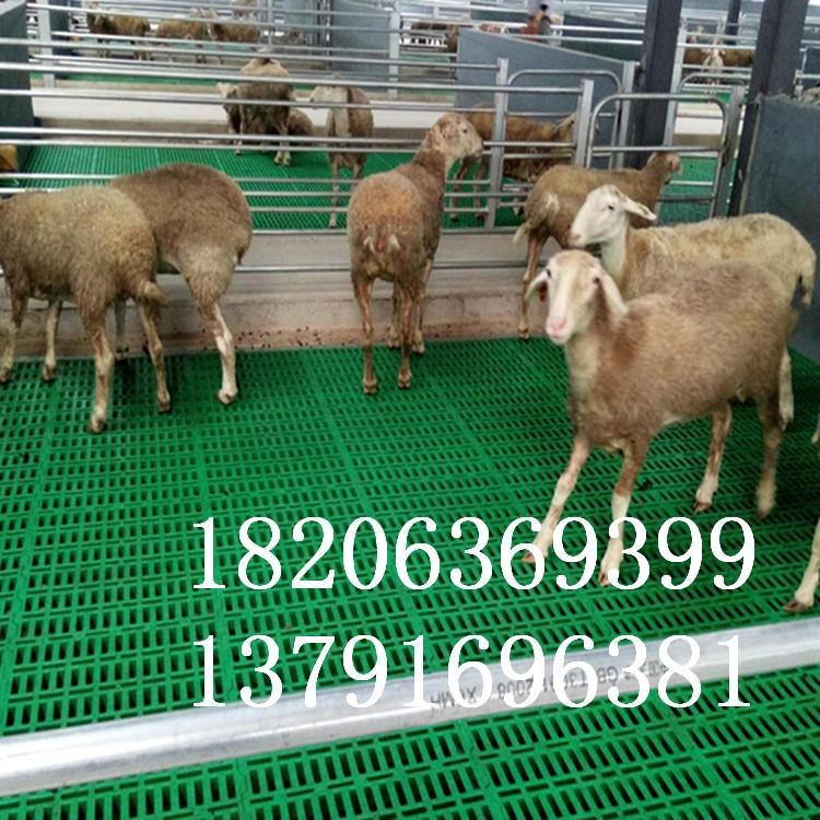 福德中兴塑料漏粪地板养羊专用漏粪地板塑料羊床厂家