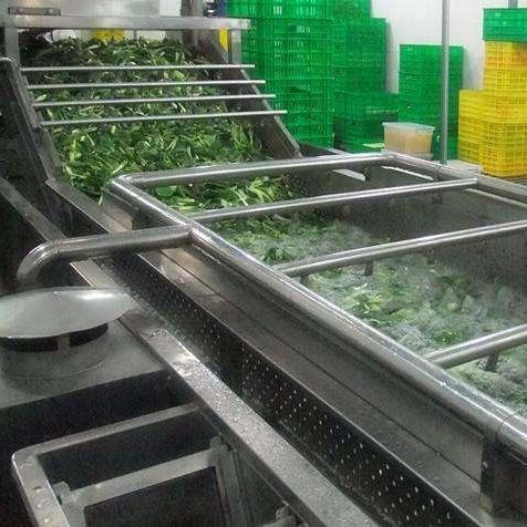 厂家直销有机蔬菜、绿色蔬菜清洗机器,性价比高,质量保证