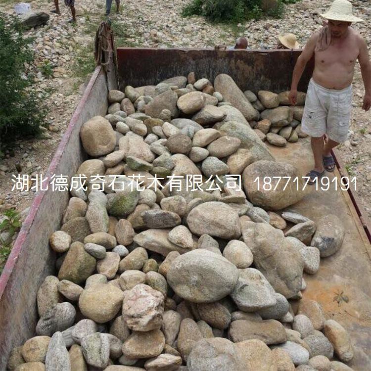 鹅卵石批发鹅卵石价格鹅卵石示例图5