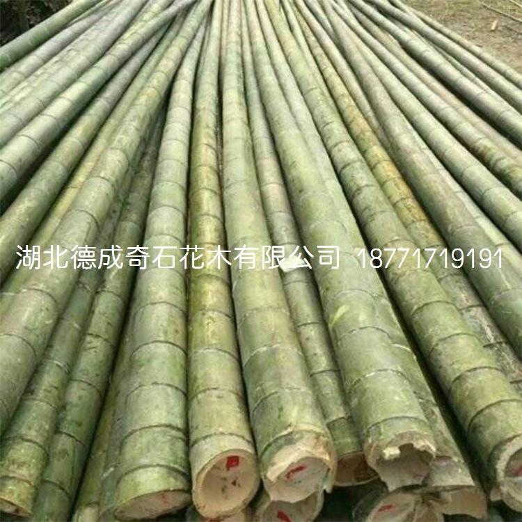 竹子园林绿化用竹子窝竹毛竹篮竹竹子批发竹子价格刚竹青竹示例图8