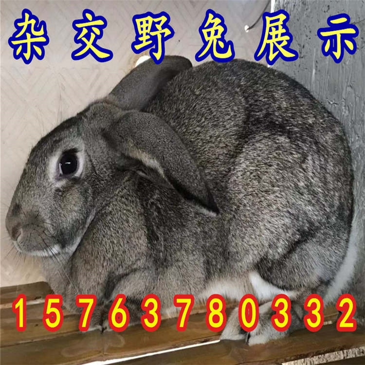 16d1f35aa4a7c085cd44a067ac4cbb9_副本_副本.jpg