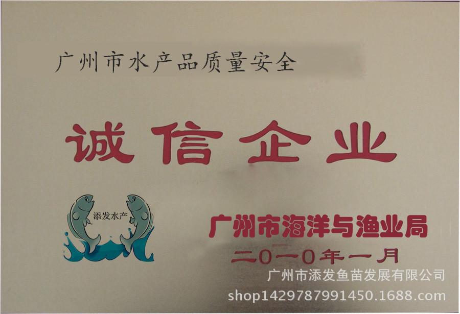 【热销】大量批发建鲤鱼苗 金丝鲤鱼苗价格示例图6