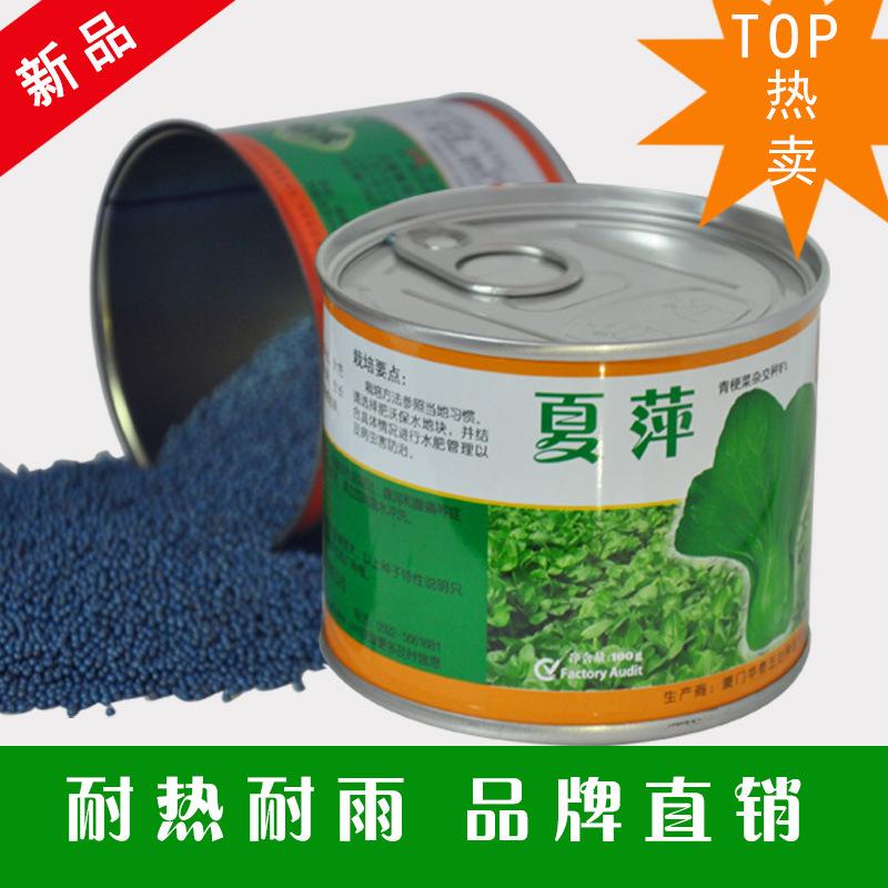 正宗夏萍抗热青梗蔬菜种子华泰颗粒夏季主要推高产蔬菜种子产品