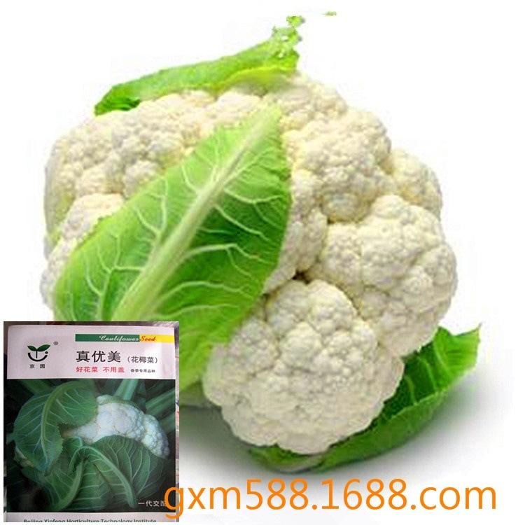 西兰花种子花椰菜蔬菜种子量从优原5粒