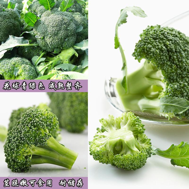 先正达曼托绿花椰菜种子进口西兰花绿花椰菜种子原种1