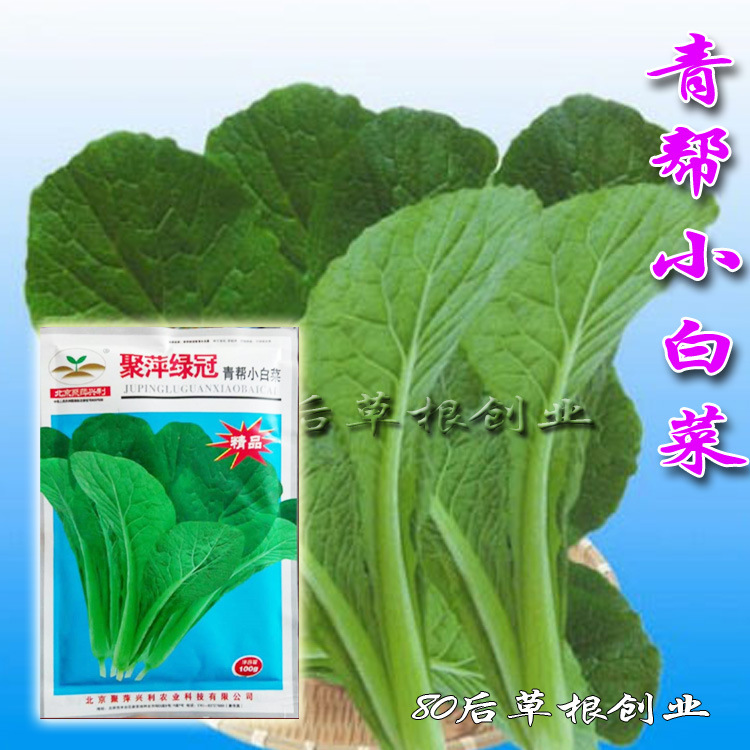 北京鞠萍绿冠绿岗小白菜种子100克耐寒耐热阳台蔬菜