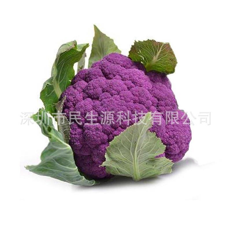 蔬菜种子紫色花椰菜种子花油菜籽花椰菜种子观赏食用蔬菜