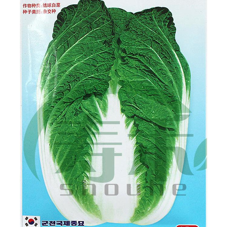 军川下溪小白菜种子高产蔬菜瓦瓦菜夏秋季播种1号