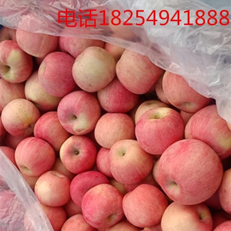 最近山東紅富士蘋果價格,今年紅富士蘋果價格,旭偉常年供應山東紅富士蘋果