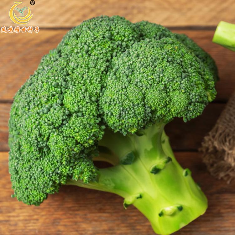 美亚西兰花种子10g基地温室蔬菜种子直接供应冯明雅士种子