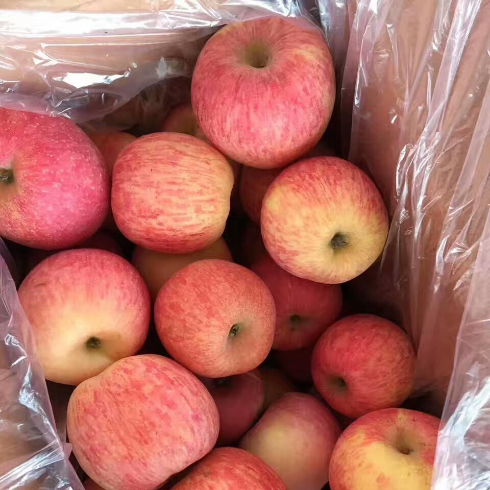 紅富士蘋果   旭偉蘋果   全年供貨