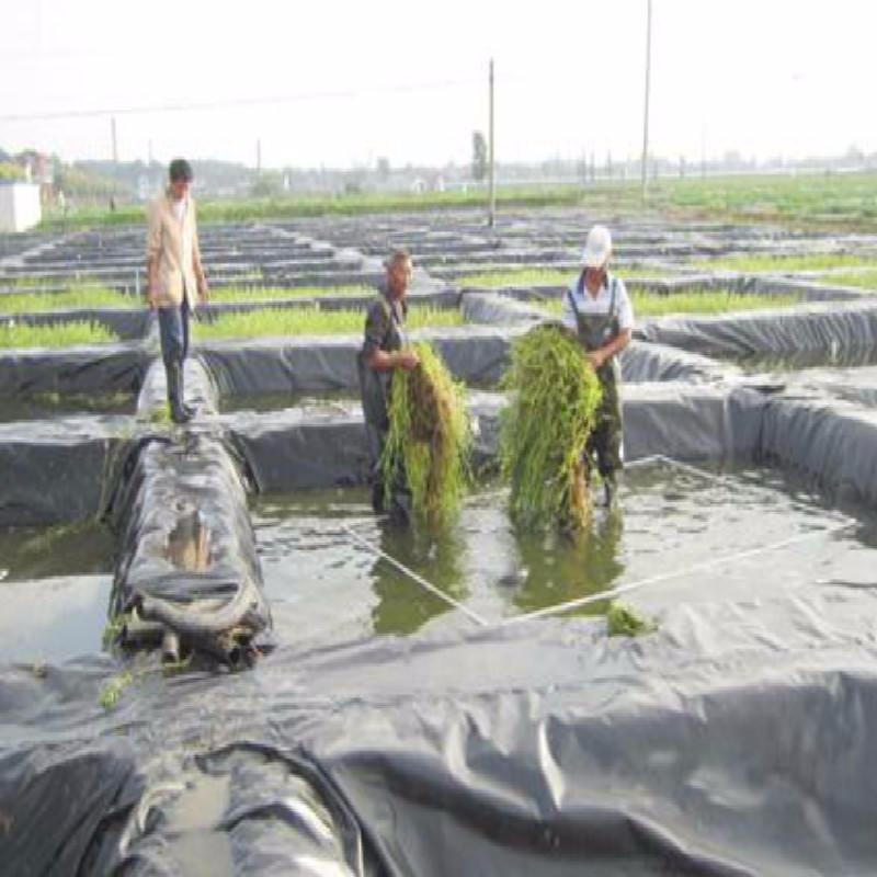 HDPE防滲隔根膜 黑色防滲隔熱阻根土工膜0.5mm魚塘養魚水產種植膜 養殖防滲膜