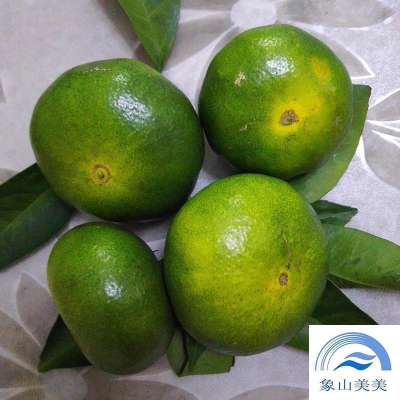 大分一號蜜桔樹苗,優質蜜桔樹苗批發,特早熟品種