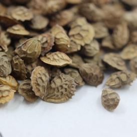 红豆草种子批发,一斤起发货